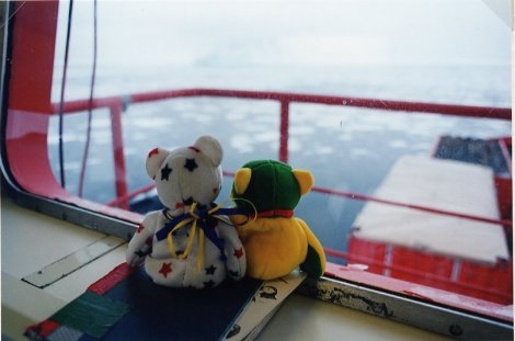 Bears Gazing out Window at Icebergs