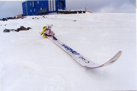 Bears on a Ski