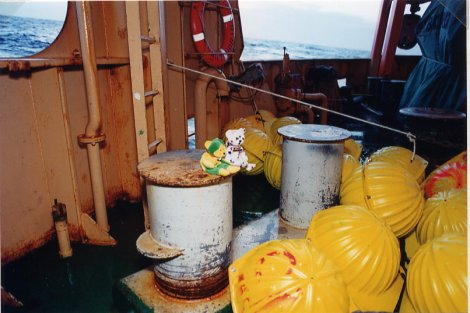 Bears with Yellow Buoys