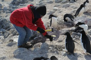 Jean_tagging_a_banded_nest