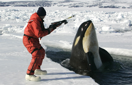 An ocean food web who s eating who science roadshow for Antarctic cuisine