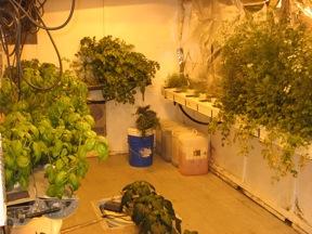 greenhouse-floor