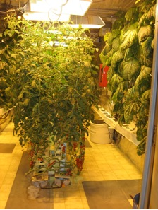 greenhouse-lots of plants