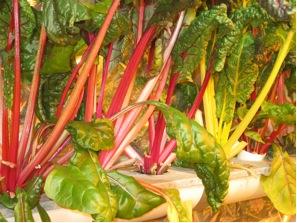 greenhouse-swiss chard