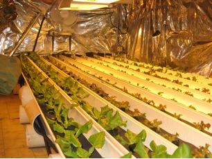 greenhouse-trays of plants