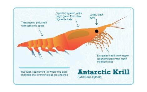 krill-diagram