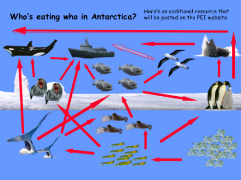 southern-ocean-food-chain